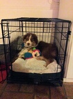 Samson getting ready to go to bed at his new home with Jessica