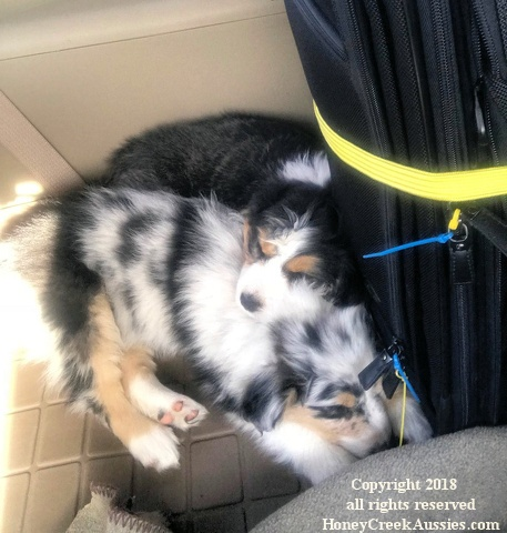 Leesi and Khloe going home