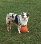 Rex Guarding his basketball