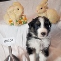 Ruby's March 2020 Litter