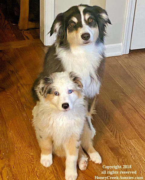 Lily and Koda together