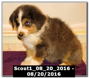 Scout1_08_20_2016