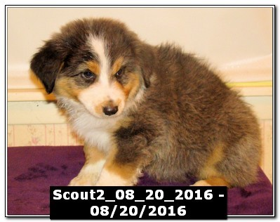 Scout2_08_20_2016